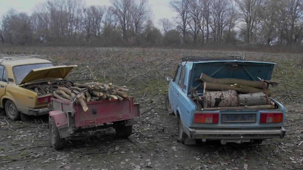 Illegális fakitermelés